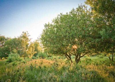 benedensas-natuur