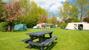 Karaktervolle groene camping